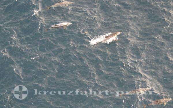 Unerwartete Begegnung mit Delfinen