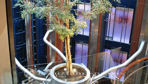 Celebrity Reflection - Ein lebender Baum