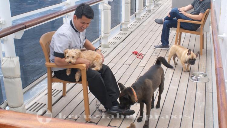 Queen Mary 2 - Kennel Master mit Freunden