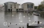Rathaus und Singschwäne