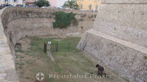 Ajaccios Citadel - Miolli's moat with donkeys
