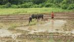 Madagaskar - Reisbauern bei Nosimbary