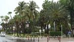 Aruba - Königin Wilhelmina Park