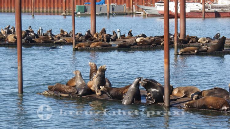 Astorias Seelöwen-Kolonie