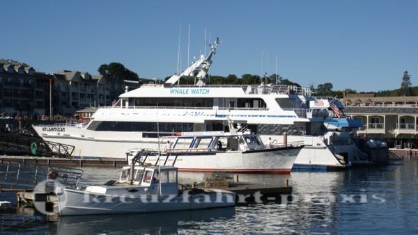 Bar Harbor - Atlanticat - Whale Watching Schiff