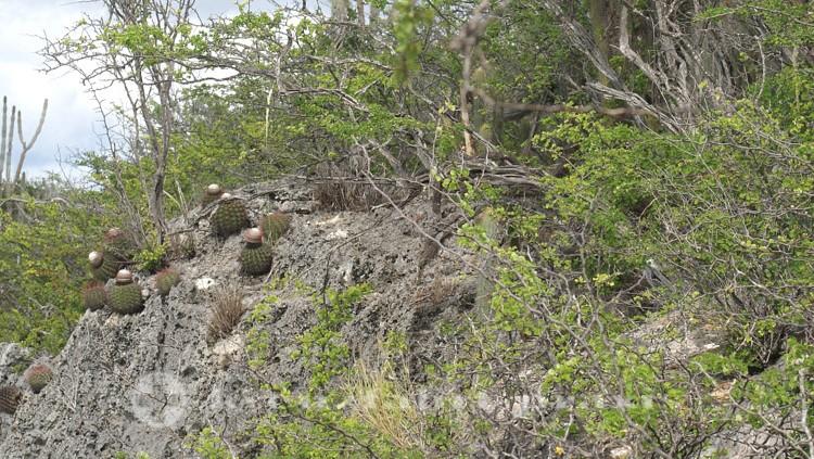 Bonaire taugt nicht zur Landwirtschaft