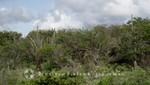 Bonaire - Landschaft bei Karpata