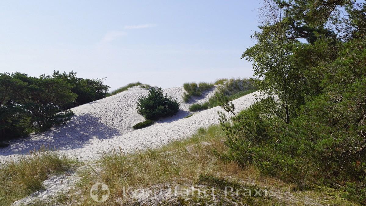 Bornholm - Dueodde dune landscape