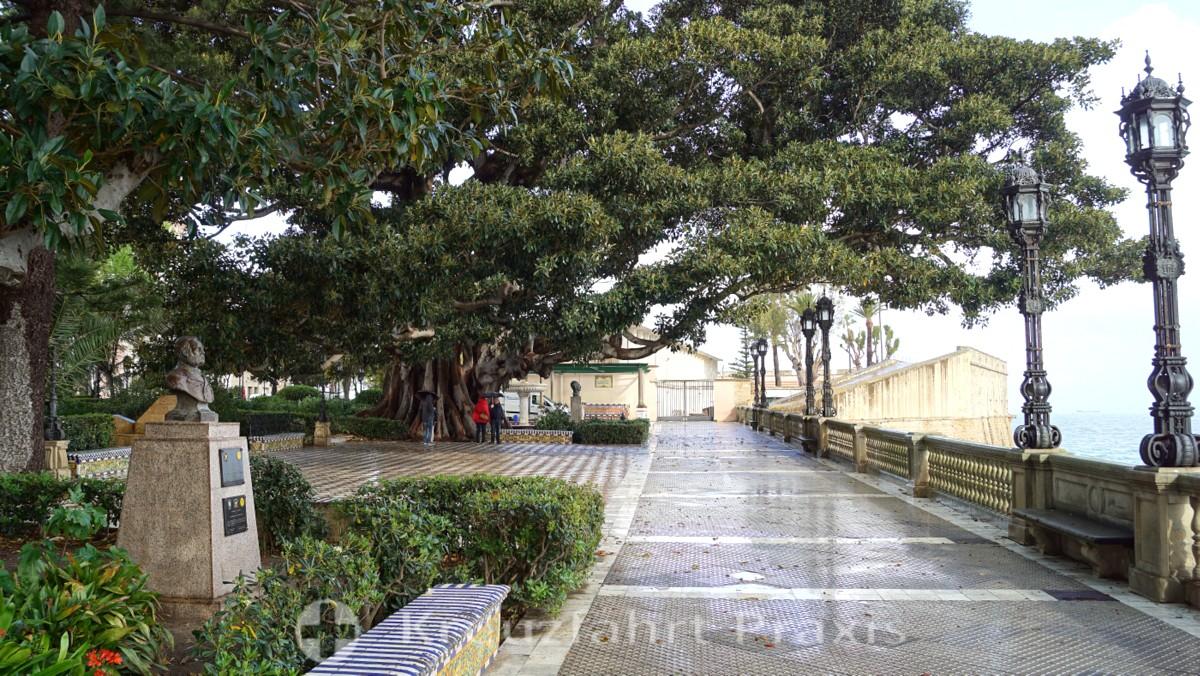 Ficusbaum vor der Baluarte de la Candelaria