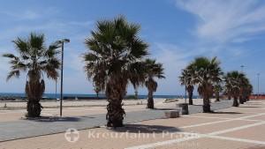 Palmen auf der Piazza della Vita