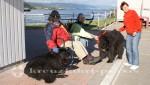 Corner Brook - Tierischer Empfang