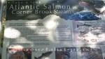 Corner Brook - Lehrreiches am Weg