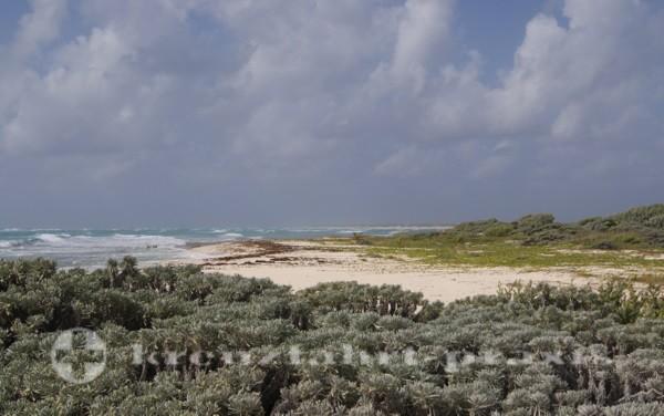Cozumel - Schutzzone für Schildkröten