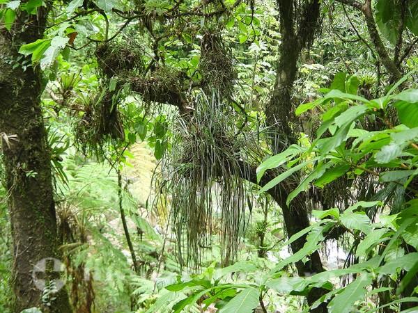 Dominica - Tropischer Regenwald
