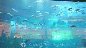 Aquarium der Dubai Mall