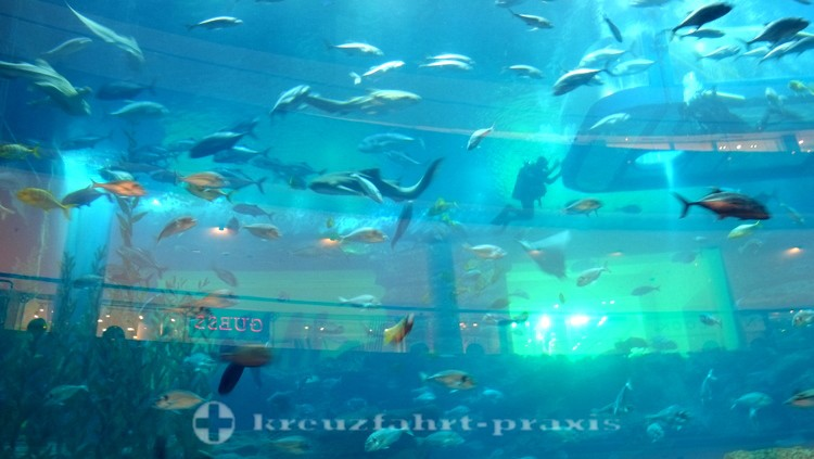 Dubai-City - Dubai Aquarium & Underwater Zoo