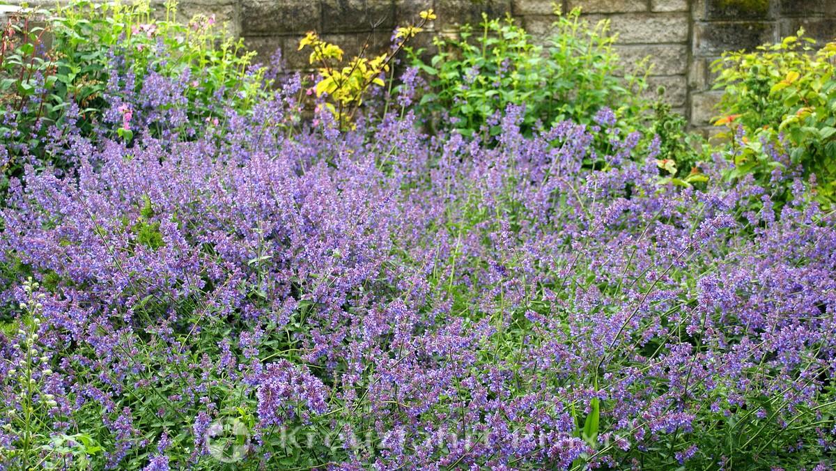 Falmouth - Blütenfülle in den Gyllyngdune Gardens