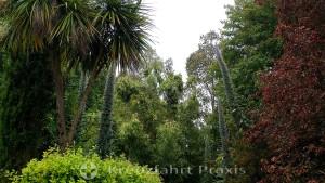 Falmouth - englische Gartenpracht