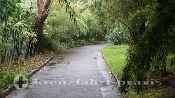 Bambus-Pflanzen in Fox Rosehill Gardens