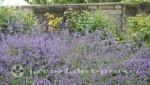 Falmouth - Darwin Garden