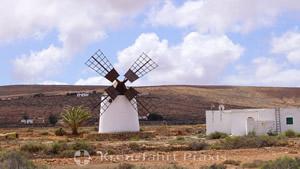 Windmühle in Llanos de la Concepcion
