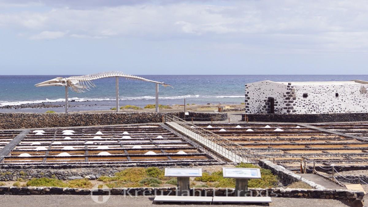 Salinas del Carmen -Salzpfannen und ein Walskelett