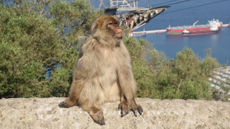 Gibraltar - Er genießt ewiges Wohnrecht
