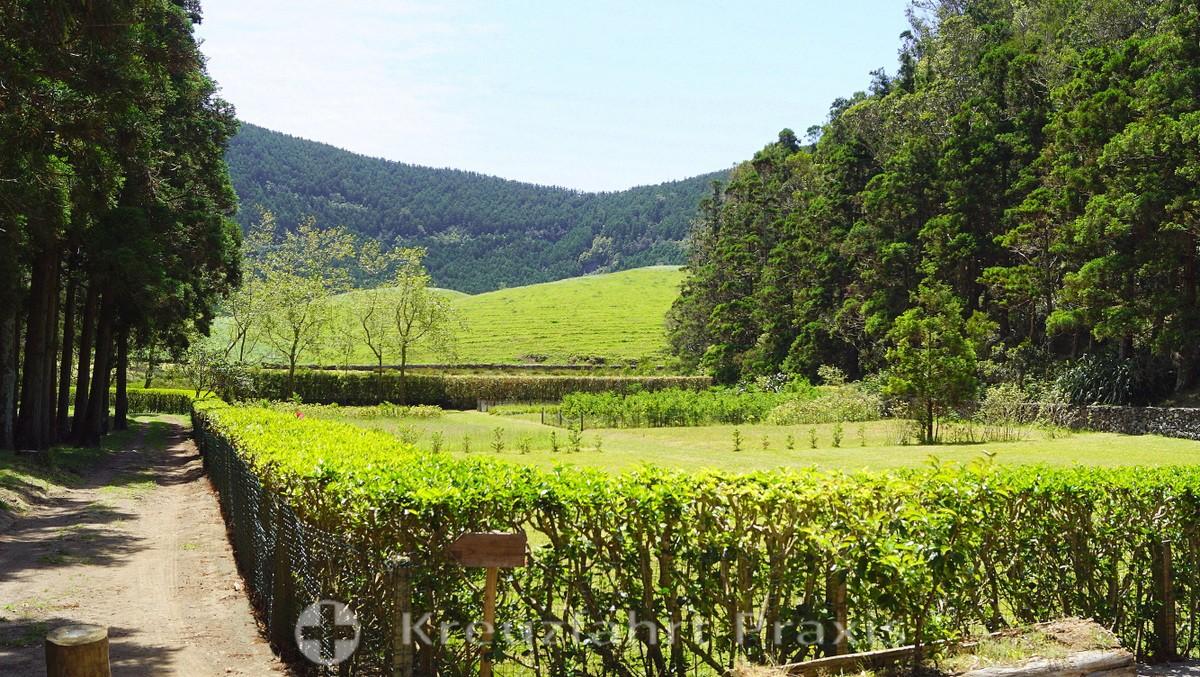 Caldeira da Graciosa - out and about in Parque Florestal