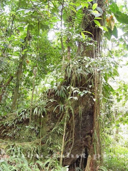 Guadeloupe - Tropenwald
