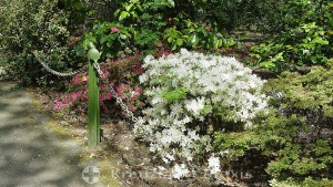Blütenpracht in Candie Gardens