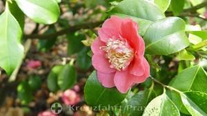 Blütenpracht in den Candie Gardens