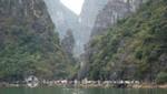 Mit Bäumen bewachsene Felsen in der Halong Bucht