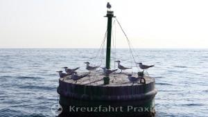 Zaungäste bei der Bootsfahrt