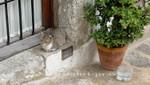 Ibiza-Stadt - Schrecken aller Mäuse