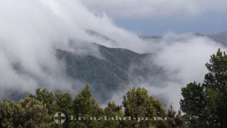 La Gomera - von Wolken verhangener subtropischer Regenwald