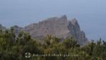 La Gomera . Im Garajonay Nationalpark