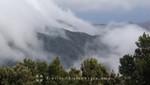 La Gomera - Subtropischer Regenwald