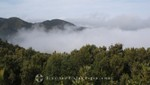 La Gomera - Wolkenverhangener Regenwald