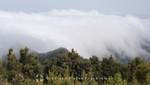 La Gomera - Wolkenbänke im Nationalpark