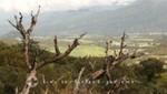 La Réunion - Landschaft bei Nez du Boeuf