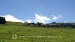 La Réunion - Das Hochplateau Plaine des Cafres