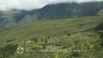 La Réunion - Bergland hinter Plaines des Cafres in Richtung Küste