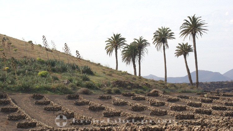 Lanzarote - Weinbaugebiet la Geria