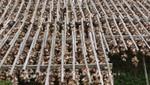 Trockengestelle für Stockfisch