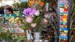 Mercado dos Lavradores - Blumen und Sämereien