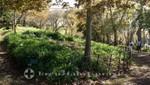 Palheiro Gardens - Zuweg