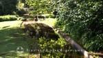 Palheiro Gardens - Teiche