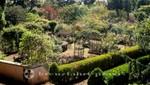Palheiro Gardens - Rosengarten