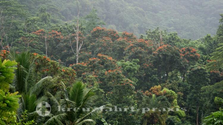 Mahé - Landschaft an der Westküste