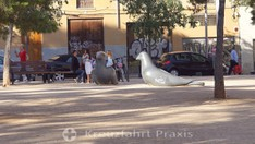 Die Tauben der Plaça de la Porta de Santa Catalina